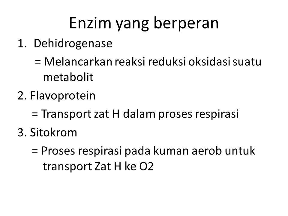Enzim yang berperan 1.Dehidrogenase = Melancarkan reaksi reduksi oksidasi suatu metabolit 2. Flavoprotein = Transport zat H dalam proses respirasi 3.