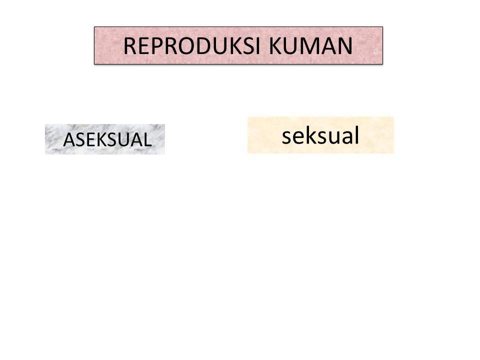 REPRODUKSI KUMAN ASEKSUAL seksual