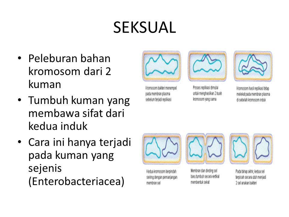 SEKSUAL Peleburan bahan kromosom dari 2 kuman Tumbuh kuman yang membawa sifat dari kedua induk Cara ini hanya terjadi pada kuman yang sejenis (Enterob