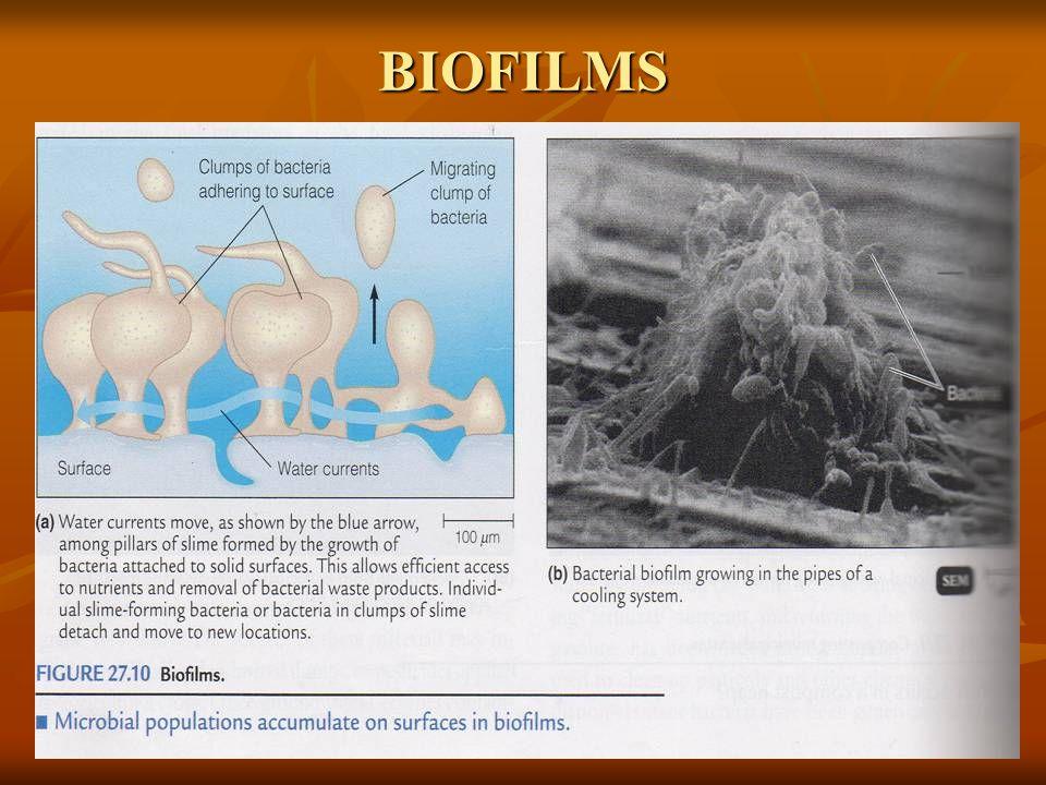 Jenis mikroba apa saja yang mampu tumbuh pada kondisi ini ?