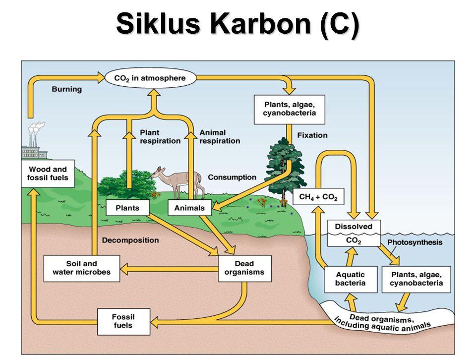 Siklus Karbon (C)