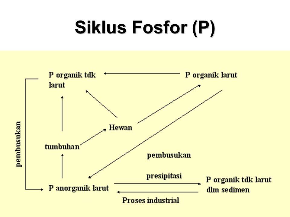 Siklus Fosfor (P)
