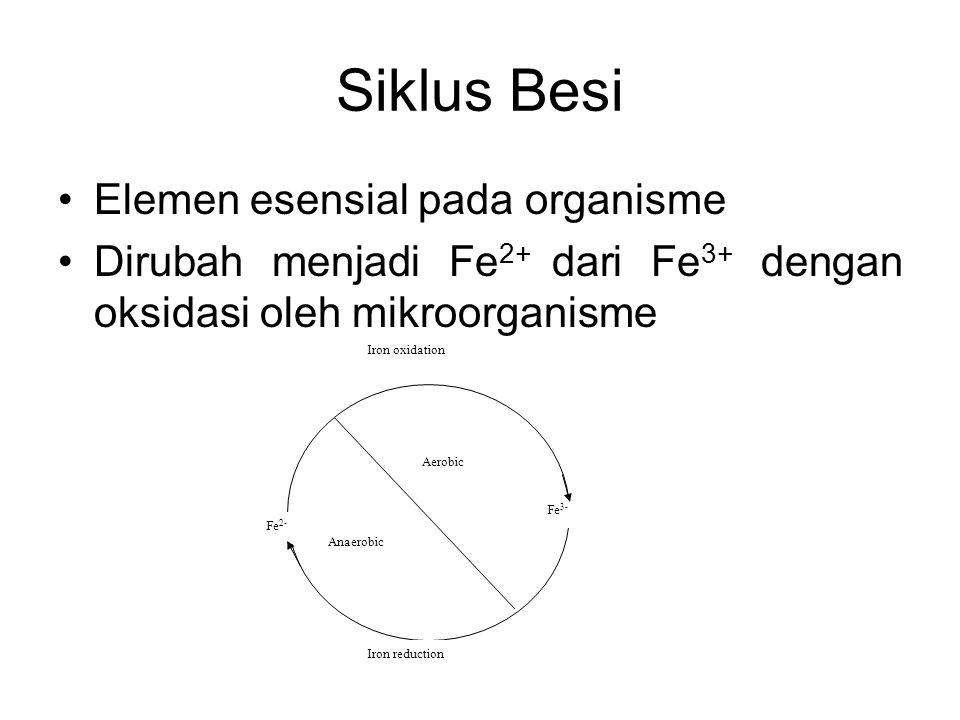 Siklus Besi Elemen esensial pada organisme Dirubah menjadi Fe 2+ dari Fe 3+ dengan oksidasi oleh mikroorganisme Aerobic Anaerobic Iron oxidation Iron