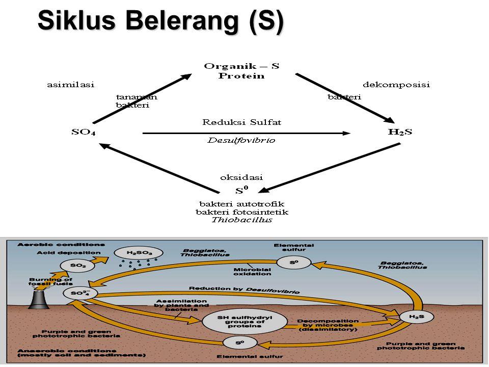 Siklus Belerang (S)