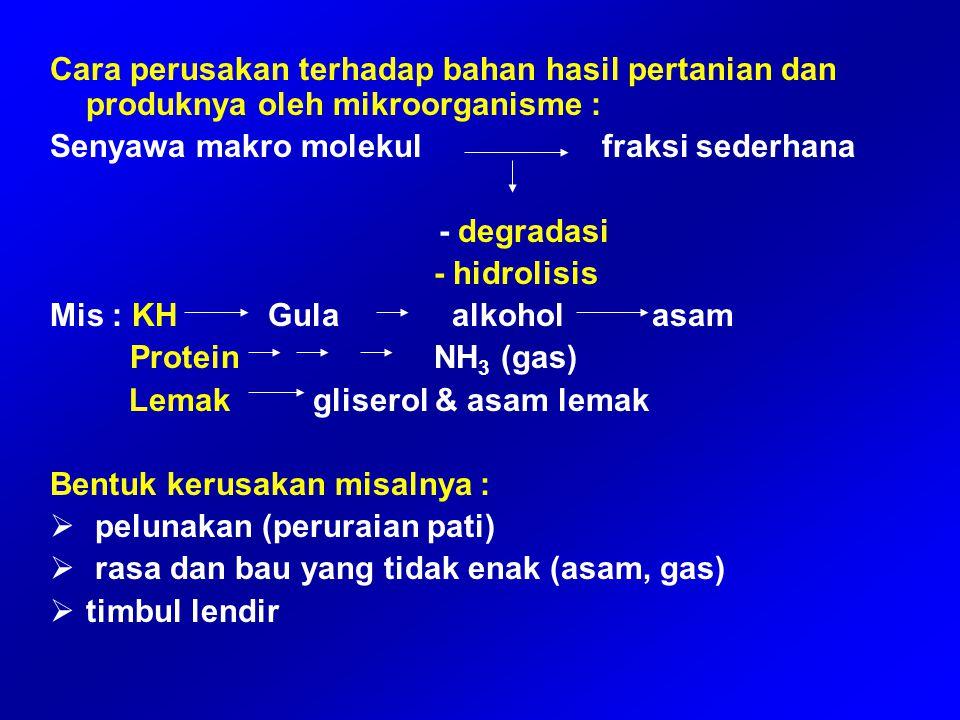 Pseudomonadaceae : Pseudomonas dan Acetobacter Pseudomonas : 1.Psikrofilik 2.Sering merusak ikan 3.Bersifat proteolitik dan lipolitik 4.Contoh P.