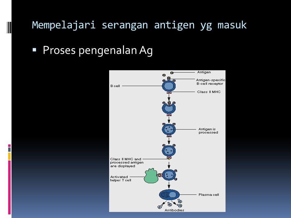 Mempelajari serangan antigen yg masuk  Proses pengenalan Ag