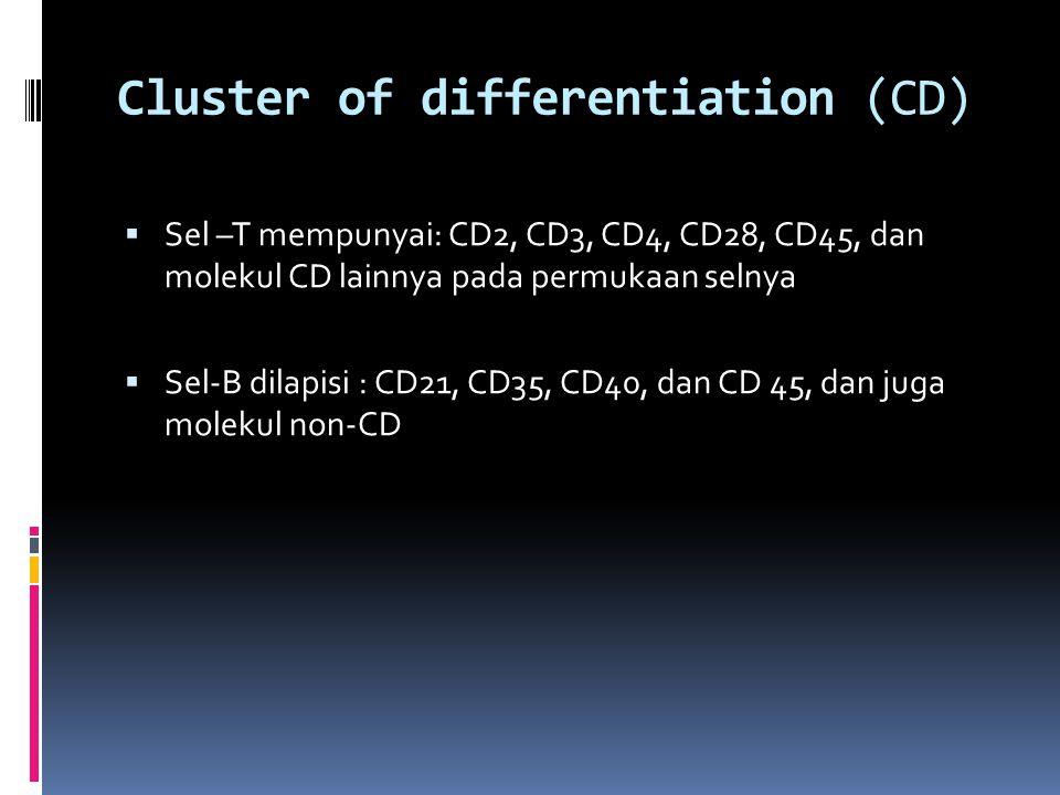 Cluster of differentiation (CD)  Sel –T mempunyai: CD2, CD3, CD4, CD28, CD45, dan molekul CD lainnya pada permukaan selnya  Sel-B dilapisi : CD21, CD35, CD40, dan CD 45, dan juga molekul non-CD