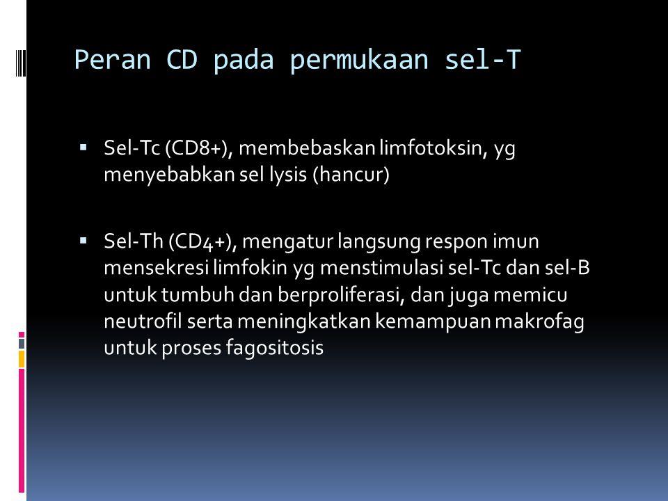 Peran CD pada permukaan sel-T  Sel-Tc (CD8+), membebaskan limfotoksin, yg menyebabkan sel lysis (hancur)  Sel-Th (CD4+), mengatur langsung respon im