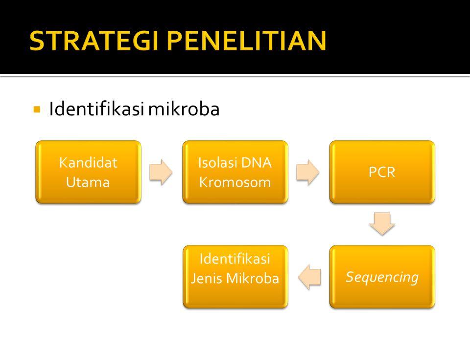  Identifikasi mikroba Kandidat Utama Isolasi DNA Kromosom PCRSequencing Identifikasi Jenis Mikroba