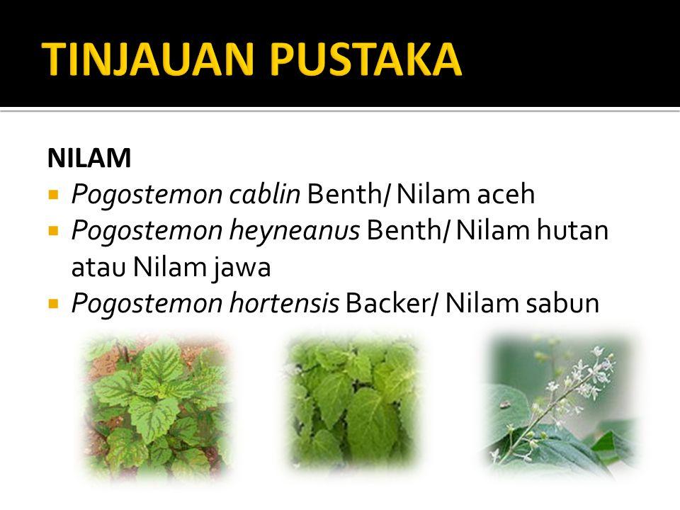 NILAM  Pogostemon cablin Benth/ Nilam aceh  Pogostemon heyneanus Benth/ Nilam hutan atau Nilam jawa  Pogostemon hortensis Backer/ Nilam sabun