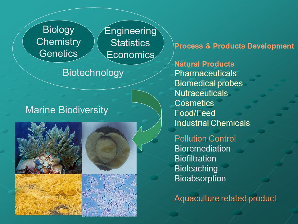 Biology Chemistry Genetics Engineering Statistics Economics Biotechnology Marine Biodiversity Process & Products Development Natural Products Pharmace