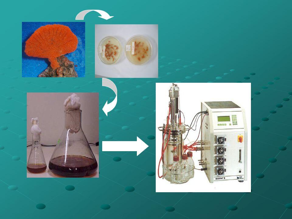 Contoh penentuan µ Waktu kultivasi (jam) Sumber karbon laktat (1 g/L) Sumber karbon laktat (3g/L) Konsentrasi sel (g/L) 00.0490.042 20.1060.197 40.3050.279 60.620.628 81.141.032 101.231.398 121.2481.722