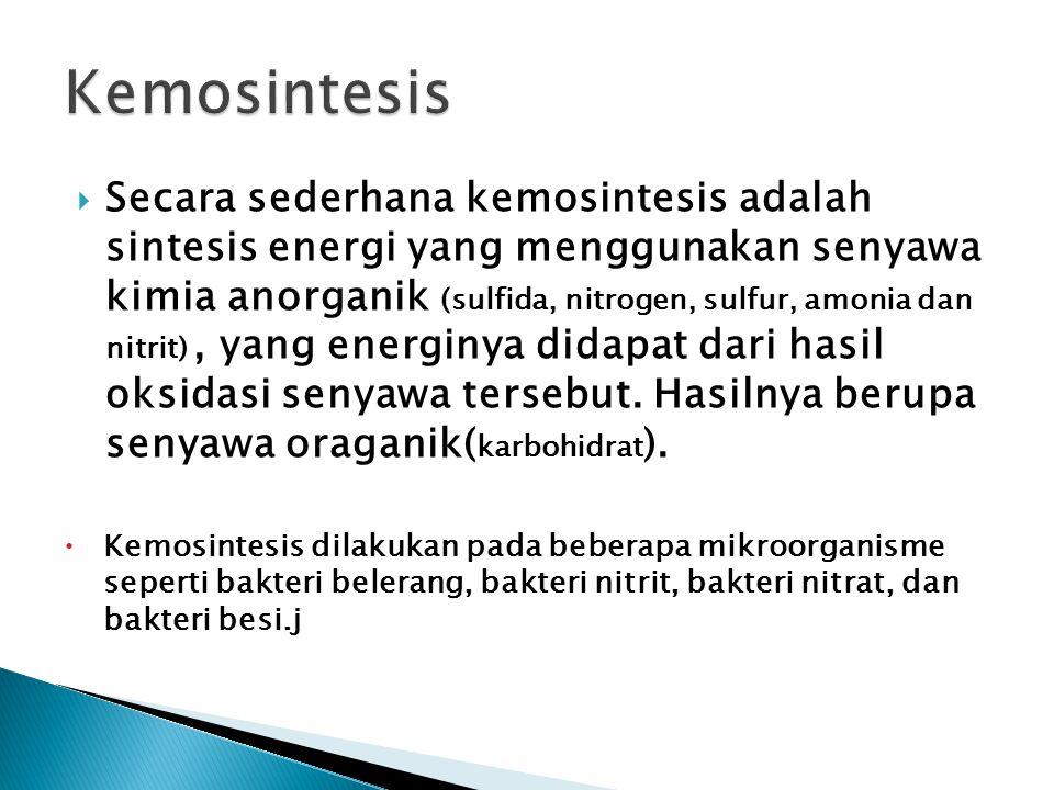  Secara sederhana kemosintesis adalah sintesis energi yang menggunakan senyawa kimia anorganik (sulfida, nitrogen, sulfur, amonia dan nitrit), yang e
