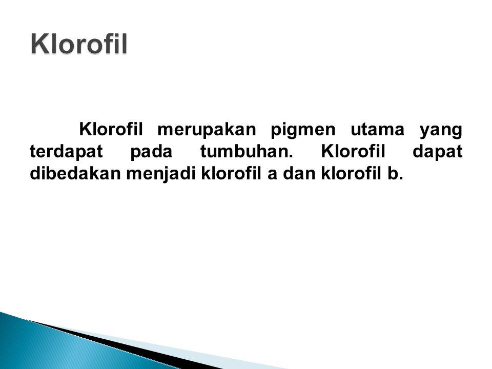 Klorofil merupakan pigmen utama yang terdapat pada tumbuhan. Klorofil dapat dibedakan menjadi klorofil a dan klorofil b.