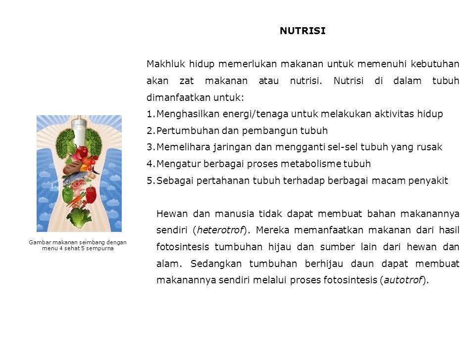 NUTRISI Makhluk hidup memerlukan makanan untuk memenuhi kebutuhan akan zat makanan atau nutrisi.