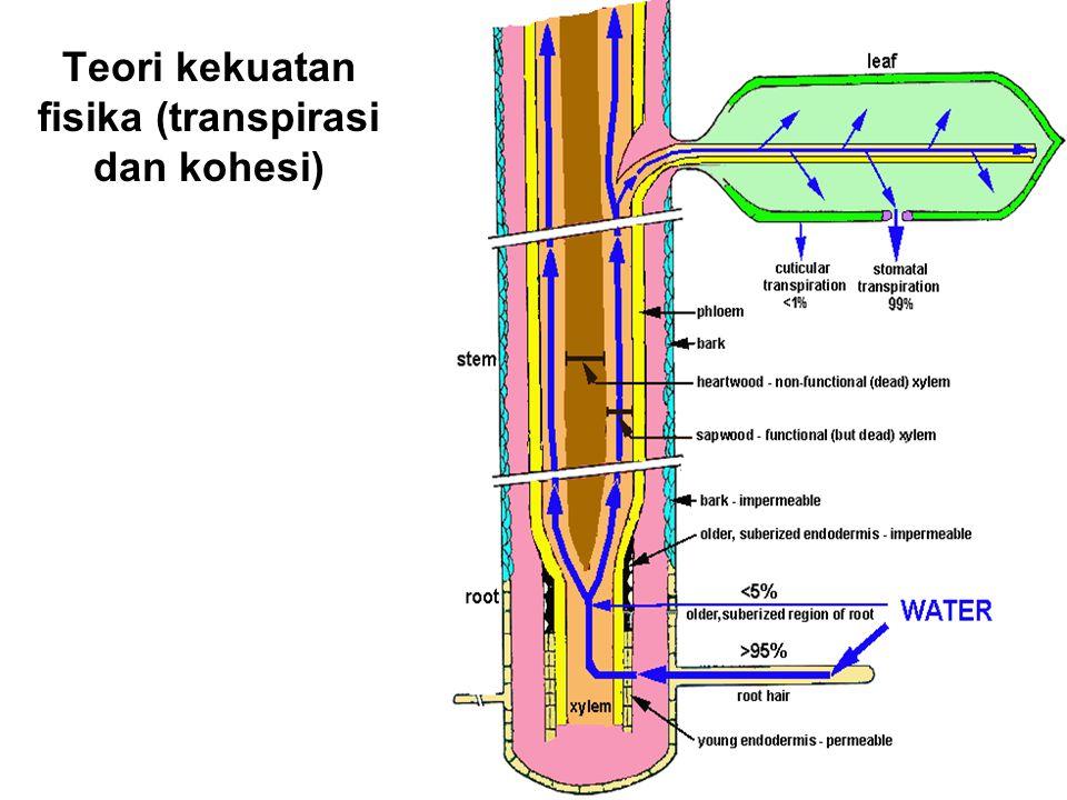 Teori kekuatan fisika (transpirasi dan kohesi)