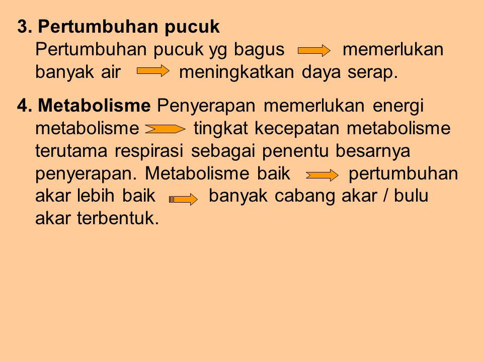 3. Pertumbuhan pucuk Pertumbuhan pucuk yg bagus memerlukan banyak air meningkatkan daya serap. 4. Metabolisme Penyerapan memerlukan energi metabolisme