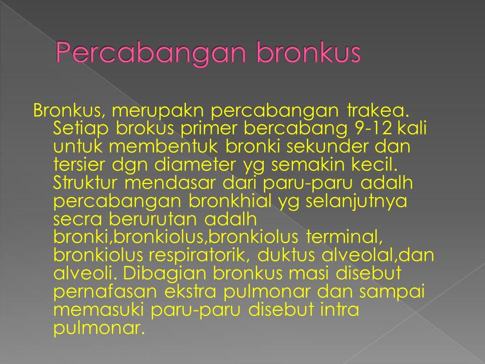 Bronkus, merupakn percabangan trakea. Setiap brokus primer bercabang 9-12 kali untuk membentuk bronki sekunder dan tersier dgn diameter yg semakin kec