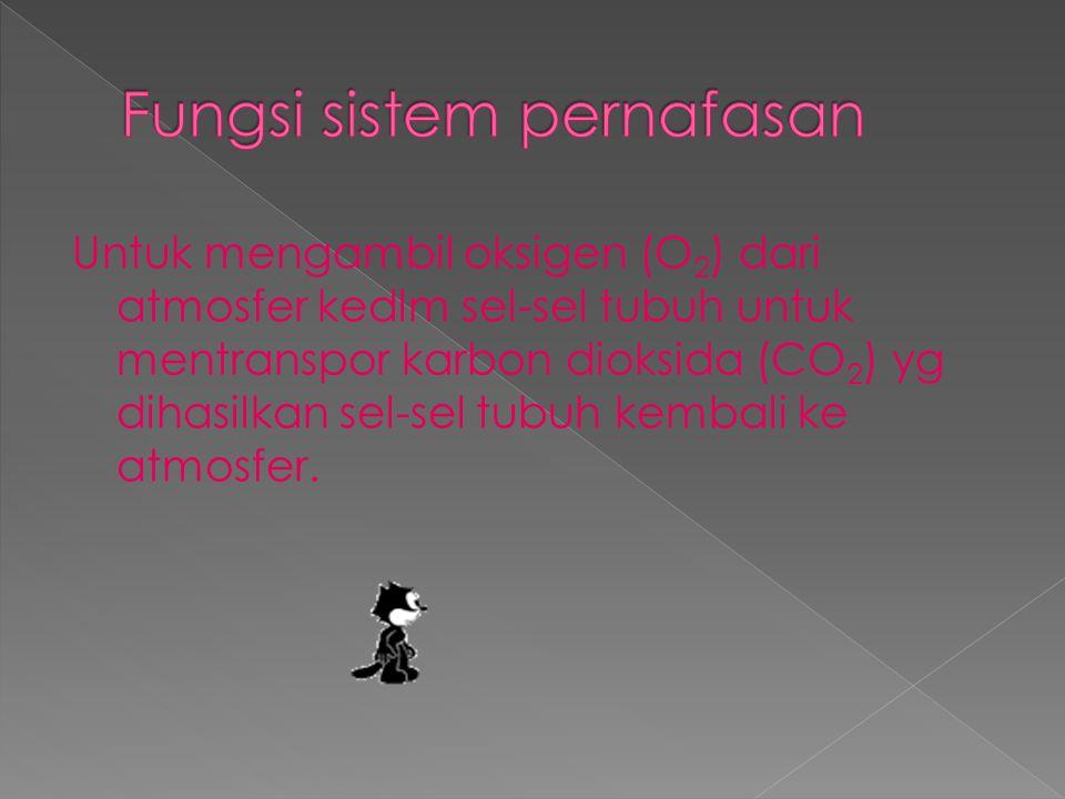 (pipa udara) adalh tuba dengn panjang 10-12 cm dan diametr 2,5 cm serta terletak di atas permukaan anterior esofagus.