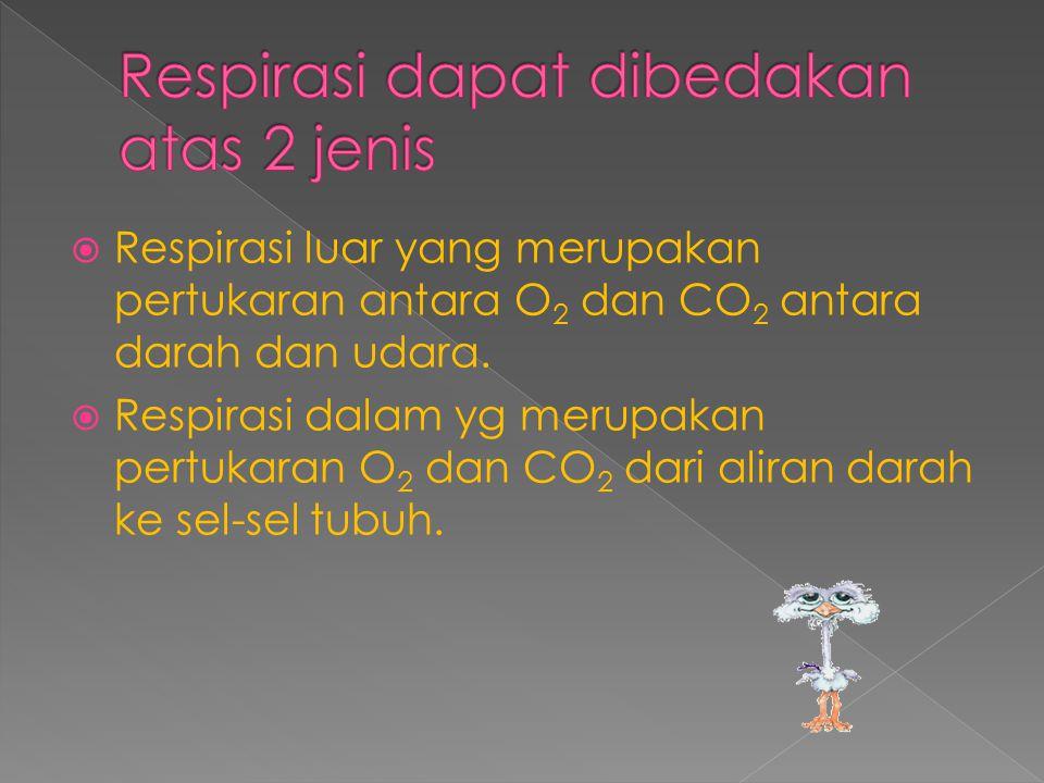  Respirasi luar yang merupakan pertukaran antara O 2 dan CO 2 antara darah dan udara.  Respirasi dalam yg merupakan pertukaran O 2 dan CO 2 dari ali