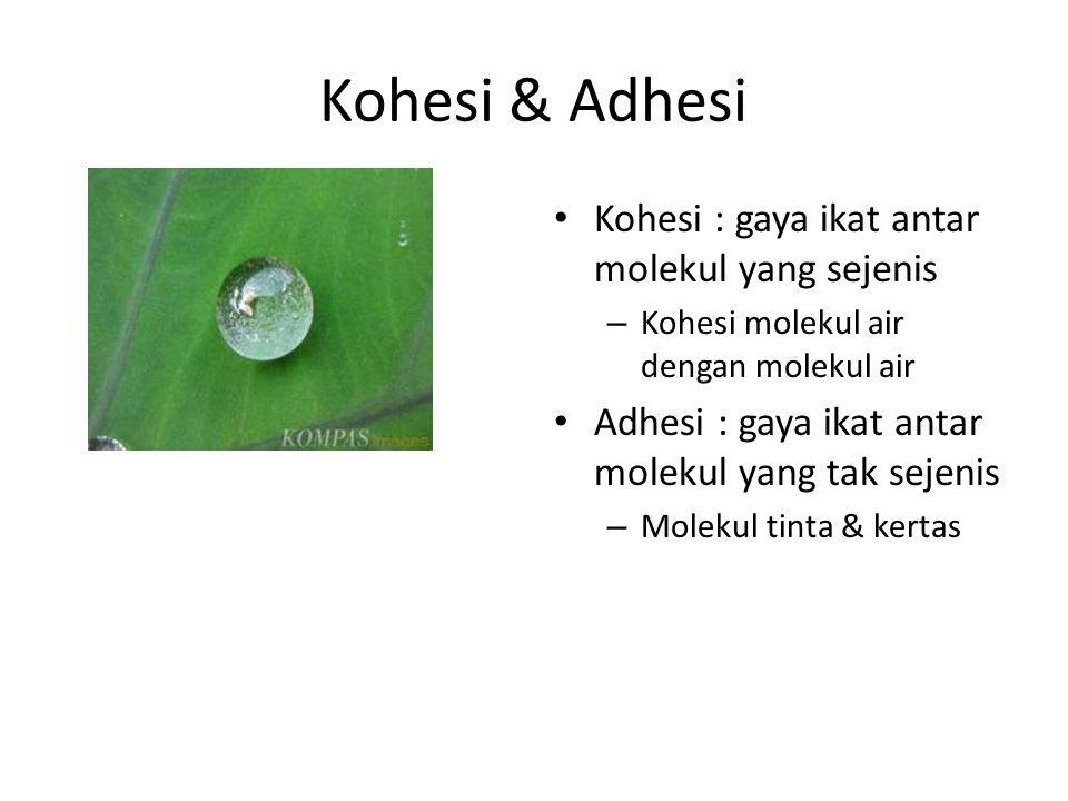 Kohesi & Adhesi Kohesi : gaya ikat antar molekul yang sejenis – Kohesi molekul air dengan molekul air Adhesi : gaya ikat antar molekul yang tak sejeni