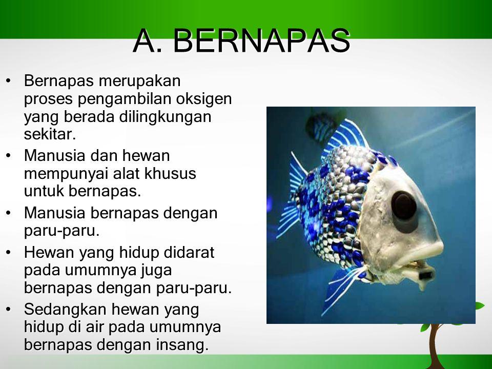 A. BERNAPAS Bernapas merupakan proses pengambilan oksigen yang berada dilingkungan sekitar.Bernapas merupakan proses pengambilan oksigen yang berada d