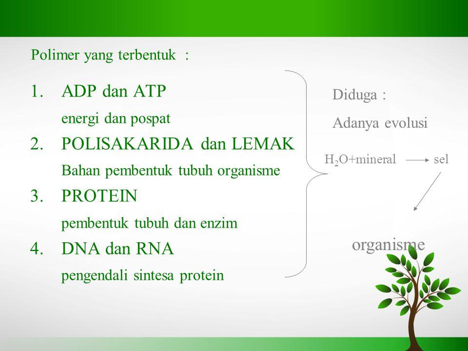 Polimer yang terbentuk : 1.ADP dan ATP energi dan pospat 2.POLISAKARIDA dan LEMAK Bahan pembentuk tubuh organisme 3.PROTEIN pembentuk tubuh dan enzim 4.DNA dan RNA pengendali sintesa protein Diduga : Adanya evolusi H 2 O+mineralsel organisme