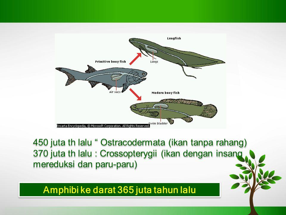 450 juta th lalu Ostracodermata (ikan tanpa rahang) 370 juta th lalu : Crossopterygii (ikan dengan insang mereduksi dan paru-paru) 450 juta th lalu Ostracodermata (ikan tanpa rahang) 370 juta th lalu : Crossopterygii (ikan dengan insang mereduksi dan paru-paru) Amphibi ke darat 365 juta tahun lalu