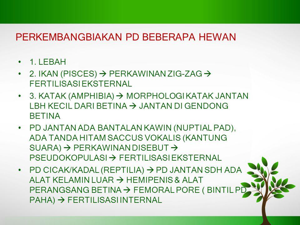PERKEMBANGBIAKAN PD BEBERAPA HEWAN 1.LEBAH 2.