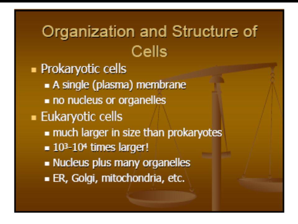 Hubungan antara Biokimia dan ilmu lainnya  Mikrobiologi, yang menunjukkan bahwa organisme sel tunggal dan virus cocok untuk digunakan sebagai sarana mempelajari jalur-jalur metabolisme dan mekanisme pengendaliannya.
