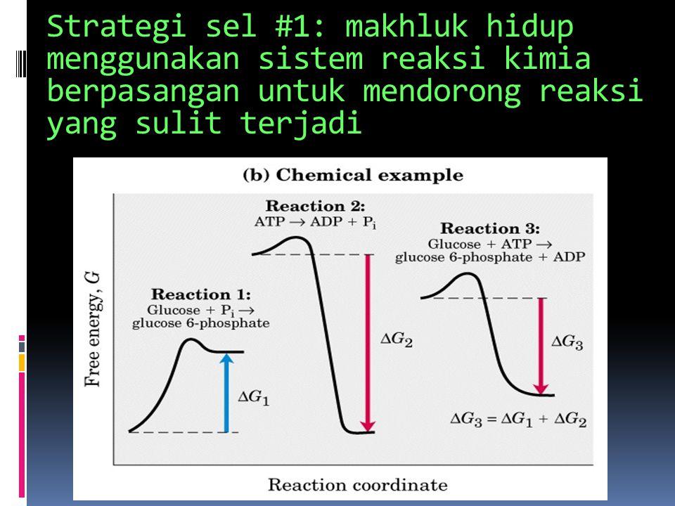 (3) MEKANISME KIMIA, untuk:  Memperoleh energi  Menjalankan reaksi kimia secara berurutan  Mensintesis & mendegradasi makromolekul  Mempertahankan suatu keadaan steady state yang dinamis  Swarakit kembali struktur yang kompleks  Menggandakan diri secara akurat dan efisien  Mempertahankan keteraturan proses biokimia