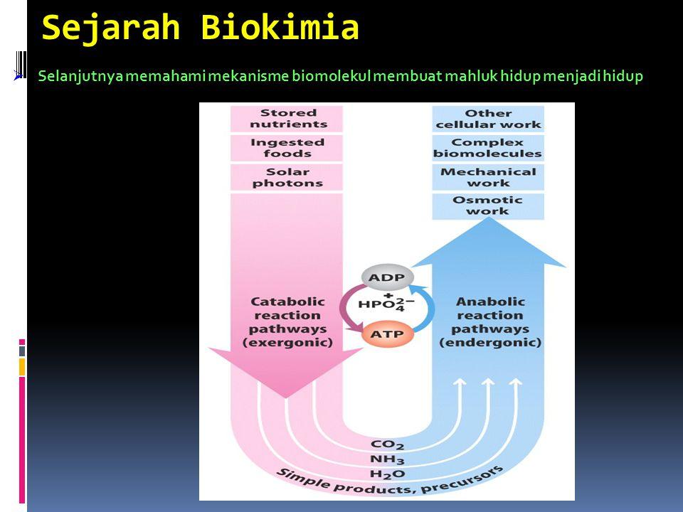 Sejarah Biokimia  Kemudian, identifikasi tipe molekul yang ditemukan dalam mahluk hidup Asam Amino NukleotidaKarbohidratLipida