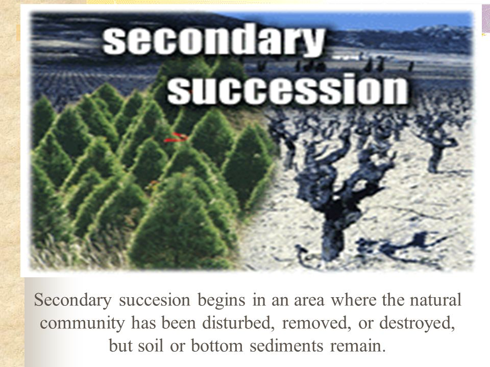 Secondary succesion begins in an area where the natural community has been disturbed, removed, or destroyed, but soil or bottom sediments remain.