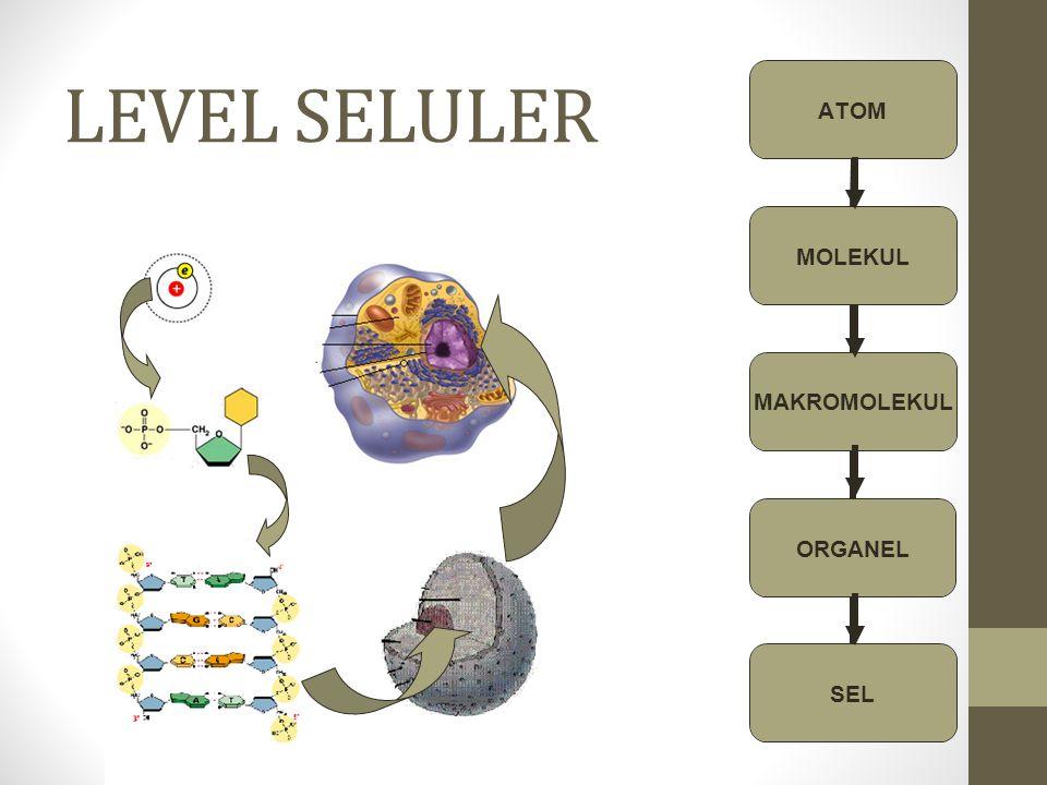 LEVEL SELULER ATOM MOLEKUL MAKROMOLEKUL ORGANEL SEL