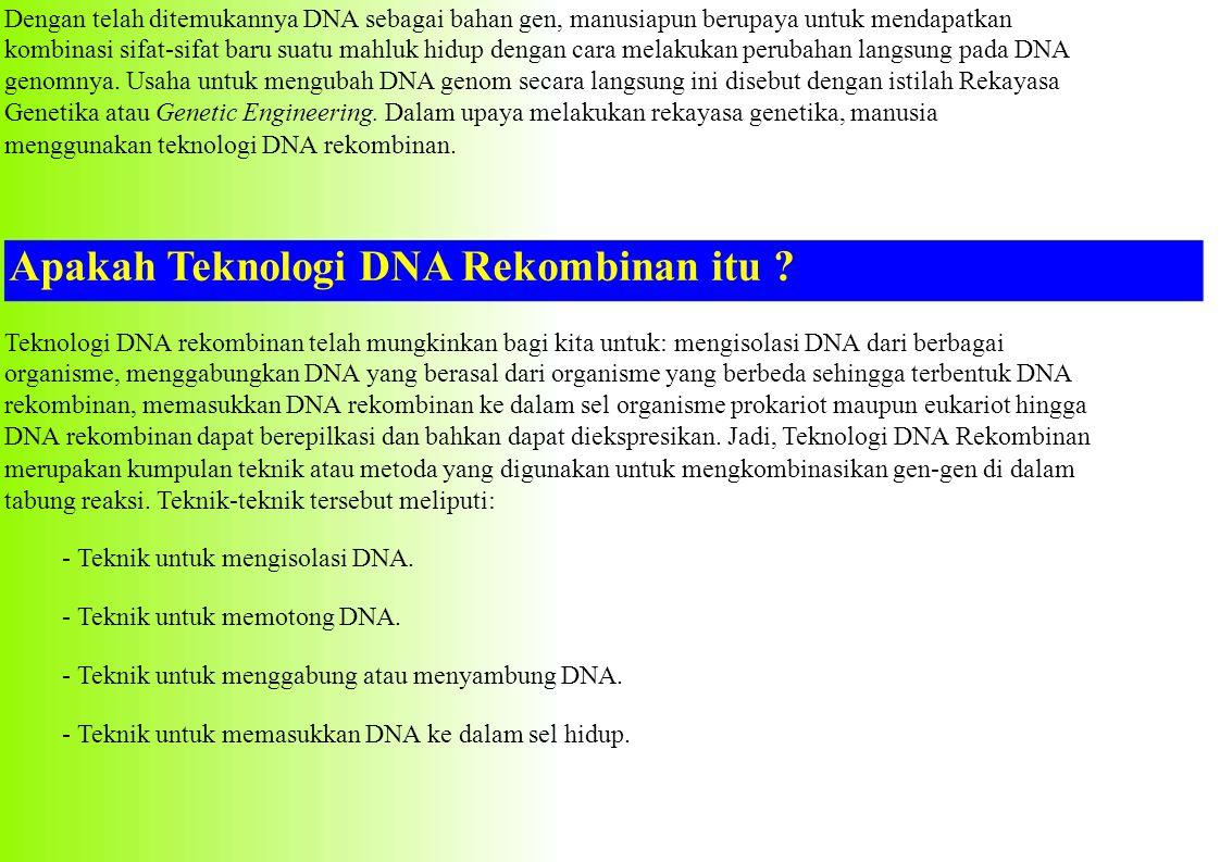 Apakah Manfaat Teknologi DNA Rekombinan .