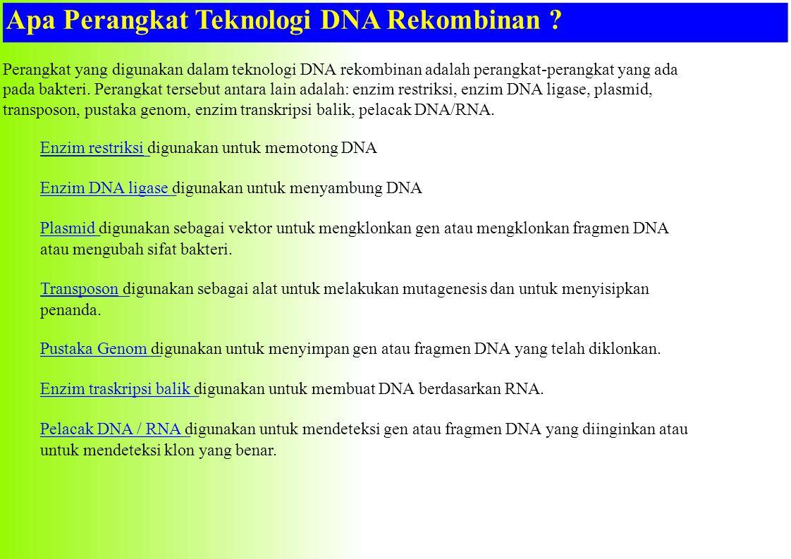 Apa Perangkat Teknologi DNA Rekombinan ? Perangkat yang digunakan dalam teknologi DNA rekombinan adalah perangkat-perangkat yang ada pada bakteri. Per