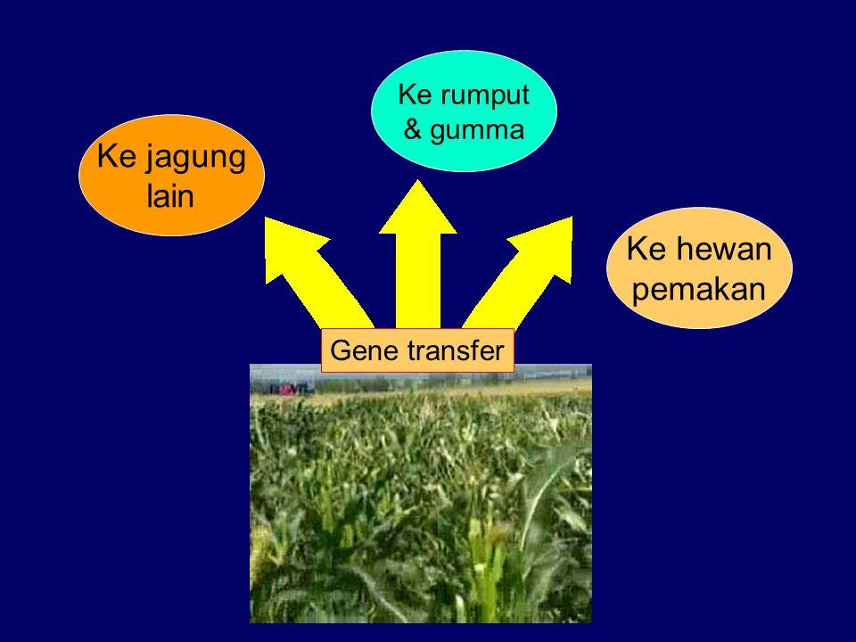 Ke jagung lain Ke rumput & gumma Ke hewan pemakan Gene transfer