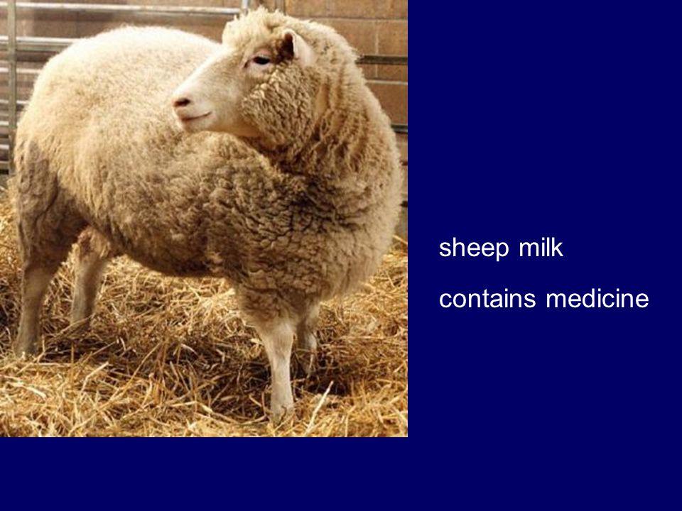 sheep milk contains medicine