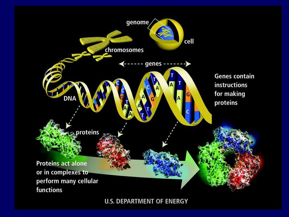 Protein adalah bahan kimia super-kompleks dimana perbedaan muatan listrik sedikit saja, atau perubahan pH, bisa memutar posisi atom C atau H sehingga jadilah bahan yang lain sama sekali