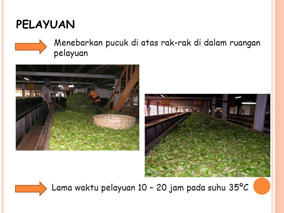 PELAYUAN Menebarkan pucuk di atas rak-rak di dalam ruangan pelayuan Lama waktu pelayuan 10 – 20 jam pada suhu 35ºC