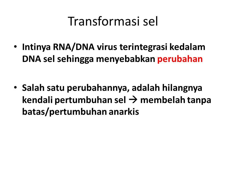 Transformasi sel Intinya RNA/DNA virus terintegrasi kedalam DNA sel sehingga menyebabkan perubahan Salah satu perubahannya, adalah hilangnya kendali p