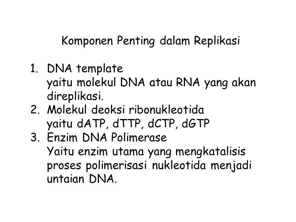 Komponen Penting dalam Replikasi 1.DNA template yaitu molekul DNA atau RNA yang akan direplikasi. 2.Molekul deoksi ribonukleotida yaitu dATP, dTTP, dC
