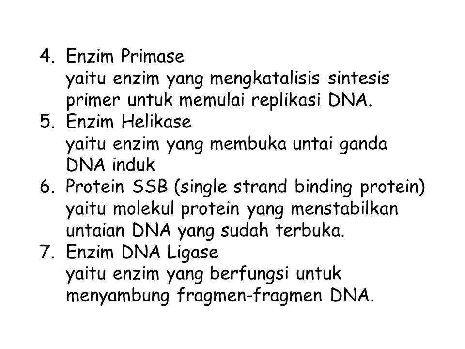 4.Enzim Primase yaitu enzim yang mengkatalisis sintesis primer untuk memulai replikasi DNA. 5.Enzim Helikase yaitu enzim yang membuka untai ganda DNA