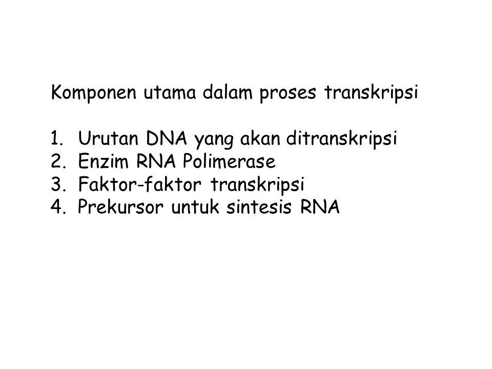 Komponen utama dalam proses transkripsi 1.Urutan DNA yang akan ditranskripsi 2.Enzim RNA Polimerase 3.Faktor-faktor transkripsi 4.Prekursor untuk sintesis RNA