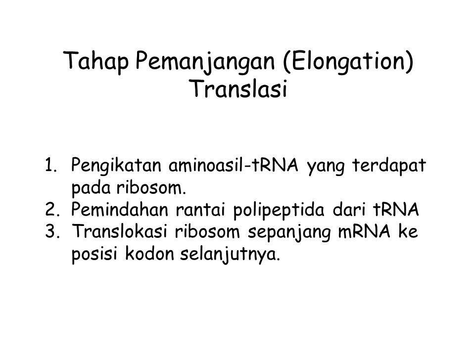 Tahap Pemanjangan (Elongation) Translasi 1.Pengikatan aminoasil-tRNA yang terdapat pada ribosom. 2.Pemindahan rantai polipeptida dari tRNA 3.Transloka