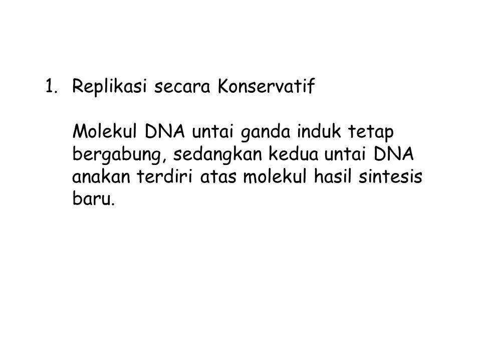 1.Replikasi secara Konservatif Molekul DNA untai ganda induk tetap bergabung, sedangkan kedua untai DNA anakan terdiri atas molekul hasil sintesis bar
