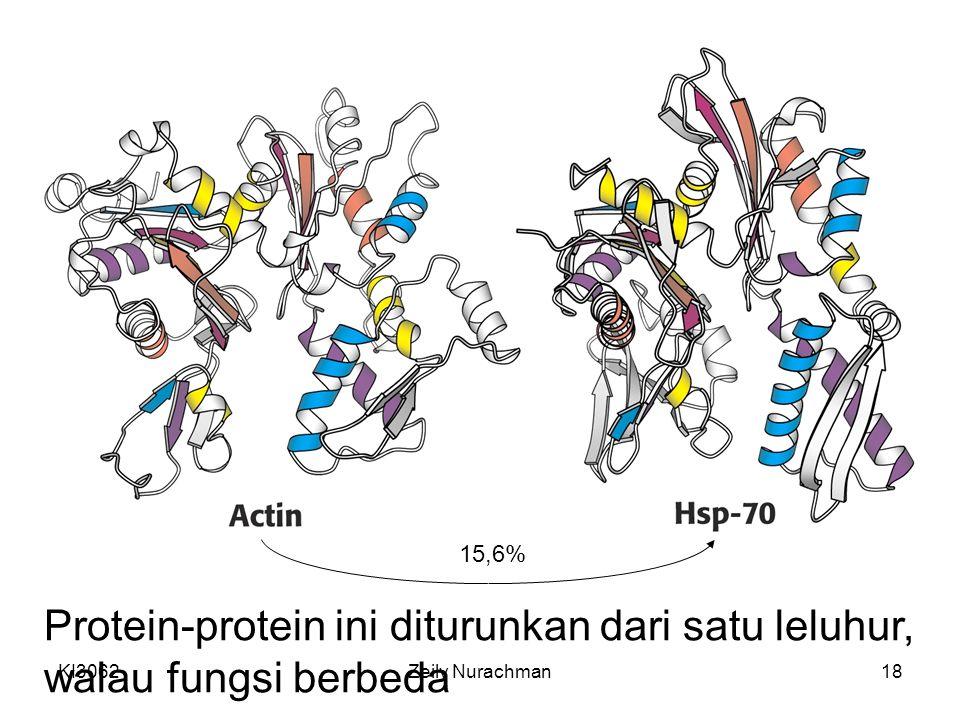 KI3062Zeily Nurachman18 15,6% Protein-protein ini diturunkan dari satu leluhur, walau fungsi berbeda