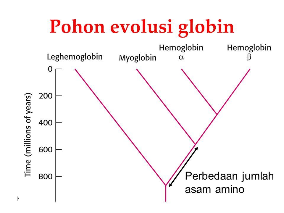 KI3062Zeily Nurachman23 Pohon evolusi globin Perbedaan jumlah asam amino