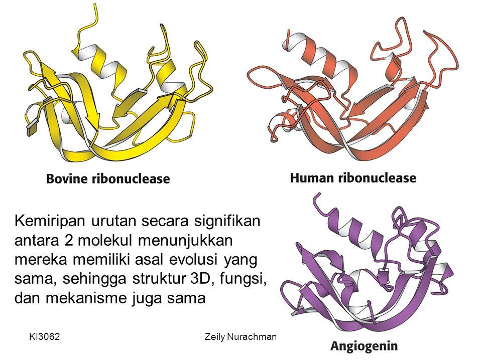 KI3062Zeily Nurachman3 Kemiripan urutan secara signifikan antara 2 molekul menunjukkan mereka memiliki asal evolusi yang sama, sehingga struktur 3D, f
