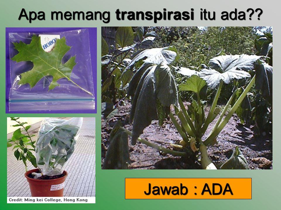 Proses Transpirasi ??? Definisi : penguapan air yang terserap tanaman